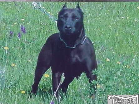 Pas izgrizao jedanaestogodišnjeg dječaka